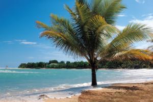 Palm Tree in Jamaica | Ragni Trotta